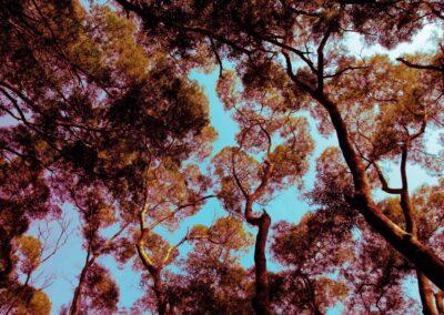 Tai Po Tree