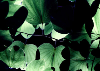 Potion Leaves 3