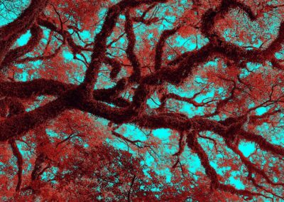 Kowloon Park Tree in RedBlue
