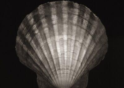 Imprints – Shells
